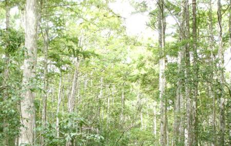 Tosohatchee Wildlife Management Area Image