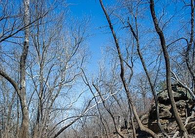 Cross Timbers State Park Image