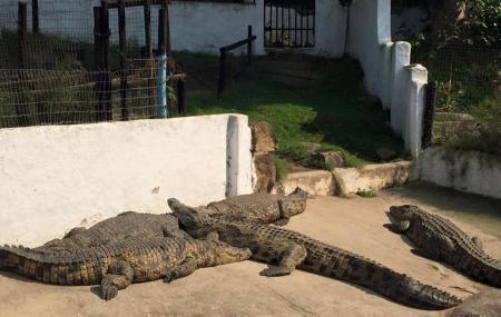 Crocodile Creek Image