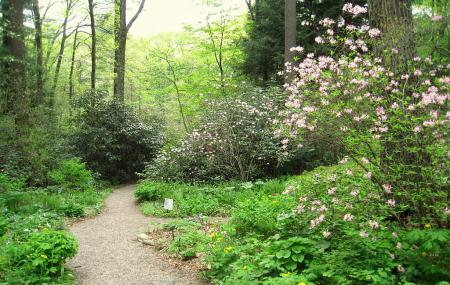 New England Wild Flower Society Garden In The Woods Image