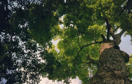 Woodland Park Image