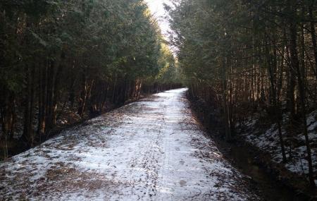 Tiger Dunlop Trail Image