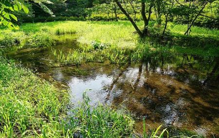 Kumoba Pond Image
