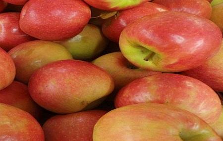 Mercier Orchards Image