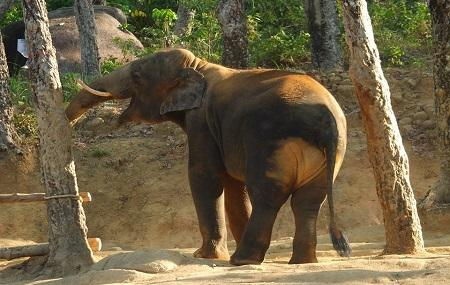 Ethical Jungle Sanctuary - Traditional Elephant Adventures Image