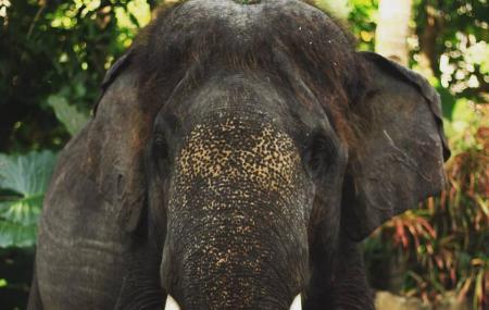 Lombok Elephant Park Image