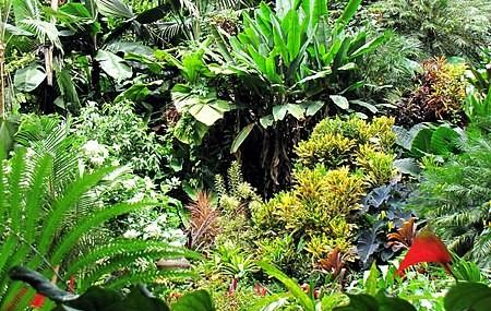 Hunte's Garden Image