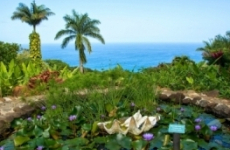 Maui Garden Of Eden, Maui | Reviews | Ticket Price | Timings ...