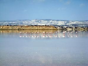 Larnaca Salt Lake, Larnaca