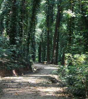 Udawattakelle Sanctury, Kandy