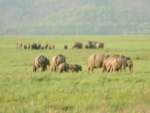 Rajaji National Park, Haridwar
