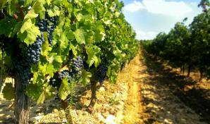 Domaine O' Vineyards, Carcassonne