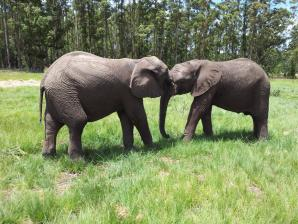 Knysna Elephant Park, Knysna