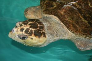 Sea Turtle, Inc, South Padre Island