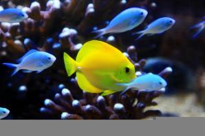 Aquarium De Vannes, Vannes