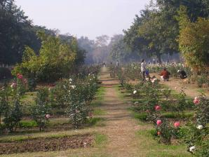Chandigarh Rose Garden, Chandigarh