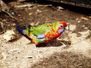 Paul's Place Wildlife Sanctuary, Kangaroo Island