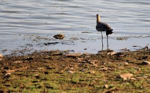 Surwal Lake, Ranthambore National Park