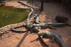 Nandankanan Zoological Park, Bhubaneshwar