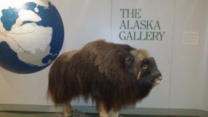 Alaska Public Lands Information Center, Anchorage