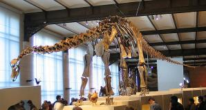 Museum Of Natural Sciences, Brussels