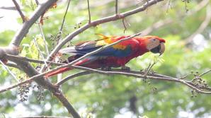 Carara National Park, San Jose