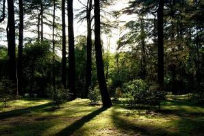 The Moorish Garden, Madrid