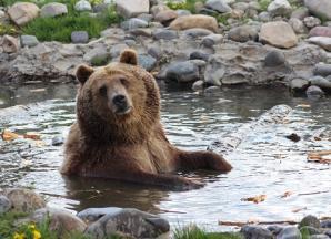 Montana Grizzly Encounter, Bozeman