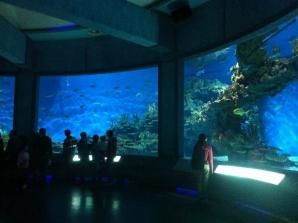 Polar Ocean World Wuhan, Wuhan