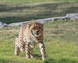 The Wild Animal Park, Chittenango
