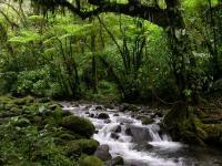 Irresistible Nature