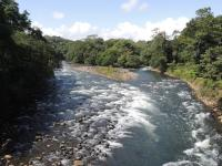Sarapiqui River Floating and Tirimbina Rain Forest Reserve