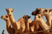 The Garden City - Al Ain Sightseeing