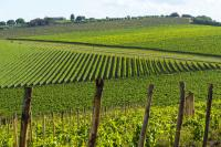Chianti Classico tour with dinner by Minivan from Pisa or Lucca
