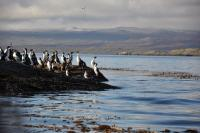 Sea Lions Island and Beagle Channel Navigation (July - Dec)