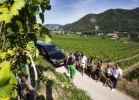 Small Group Wine Tasting Wachau Valley