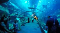 The Dubai Mall - Dubai Aquarium  and Underwater Zoo
