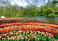 Keukenhof and Flower fields tour from Amsterdam