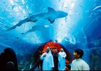 Dubai Aquarium and Under water zoo (Researcher Package)