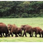 Best of 4 Days in Coorg (Scotland of India)
