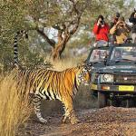 Complete Guide to Jungle Safari in India