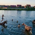 Snapshots Of Dacha Life in Russia - Stories that Unfold