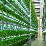 Vertical Farming- The Next Big Thing In Automated Farming