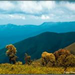 Places and Activities to Engage You in Chikmagalur