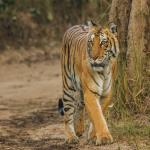 Trip To Jim Corbett National Park