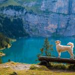 15 Most Terrific Hiking Trails In Switzerland!