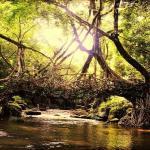 The rivers, cliffs, bridges and waterfalls of Cherrapunji