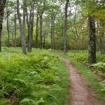 7 Best Hiking Trails In North Carolina
