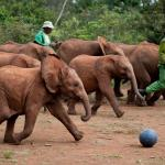 David Sheldrick Wildlife Trust Or Sheldrick Elephant Orphanage