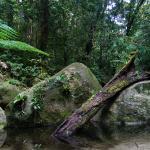Daintree Rainforest National Park